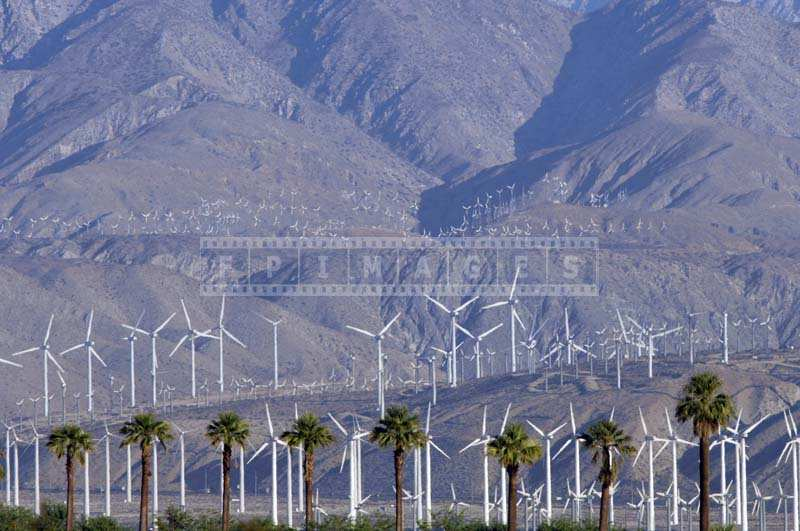 Wind Turbines and Palm Trees, green energy