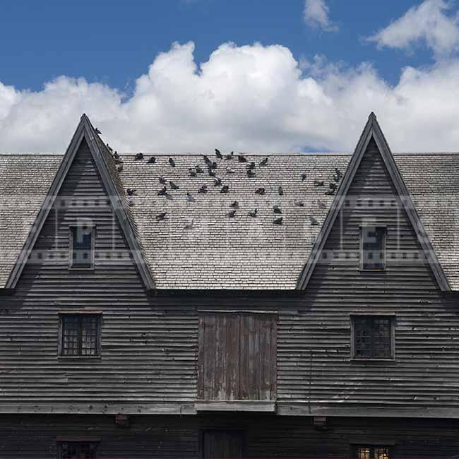 Cooper factory old wooden building, pigeons on the roof