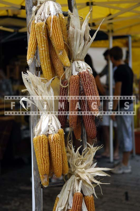 Corn Cobs use for decorating
