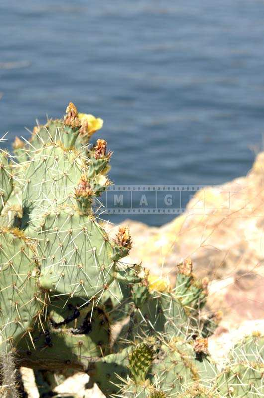 A Closer Image of Lovely Cactus Flowers