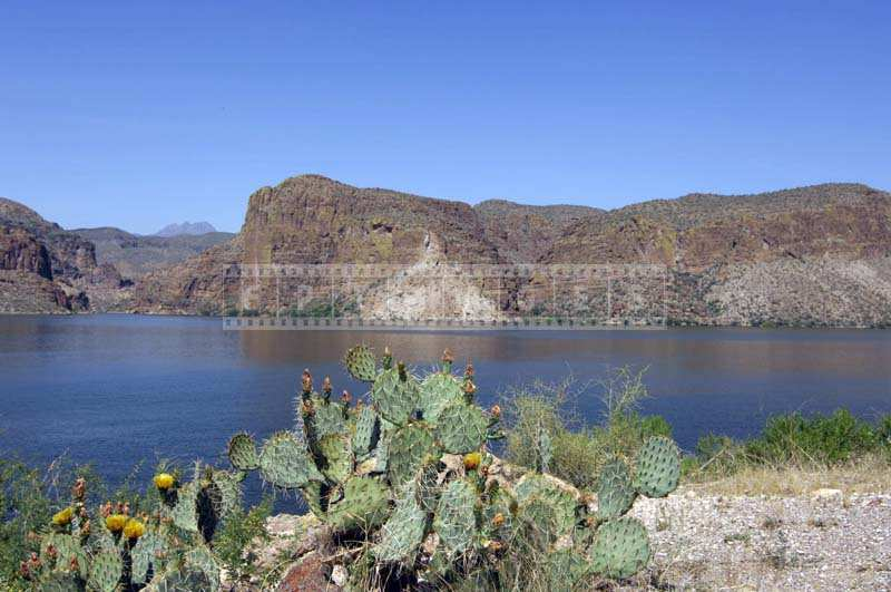 Pretty Cactus Flowers along the Canyon Lake, desert mountains and lake landscape