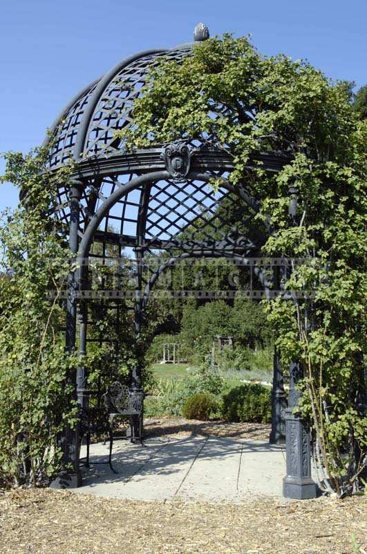 The Beautiful Cast Iron Gazebo Dome of the Structure Partially Covered in Vines