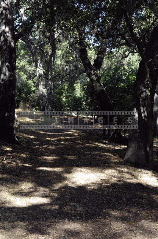 Botanical Garden Path under Tree Shade