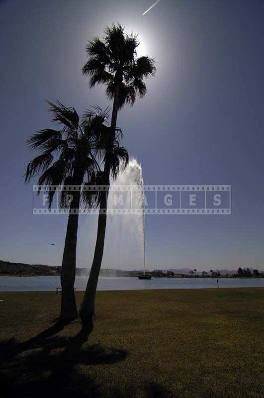 Palm Trees with the Fountain as Background