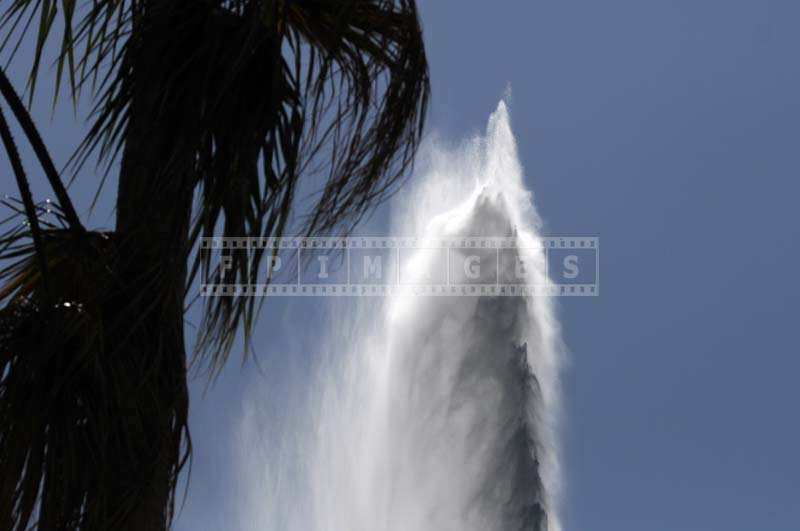 The Water Jet behind the Tall Palm Trees