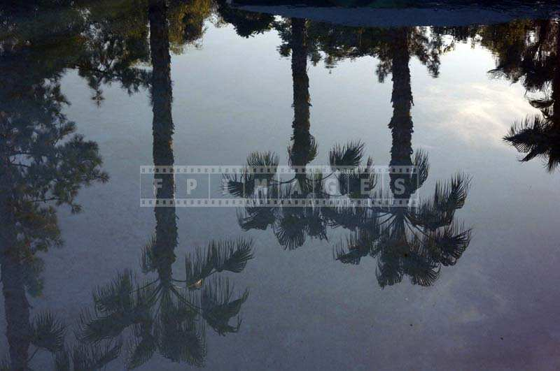 The Trees and the Sky Reflected in the Pool Waters