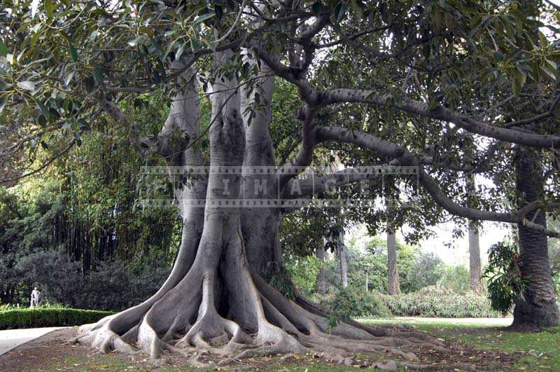 The Intricate Network of Tree Branches
