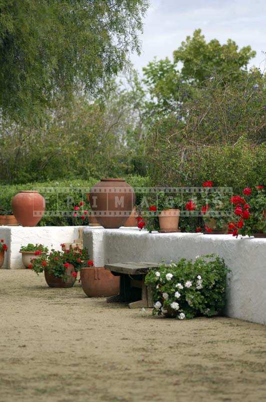 White Wall with Lovely Red and White Flowers