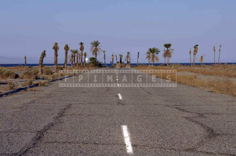 Dieing palm trees and abandoned street