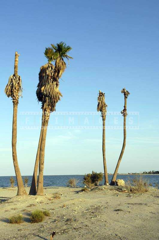 Tall Wasted Palm Trees near the Shore