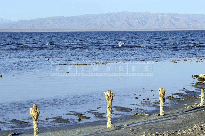 Salton Sea shore showing signs of heavy pollution