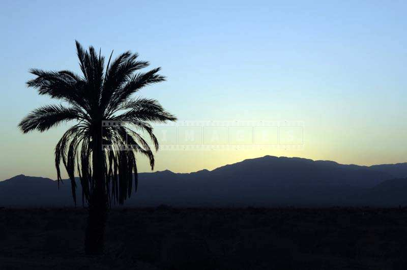 The Silhouette of a Tall Palm Tree and the Mountains at a Distance