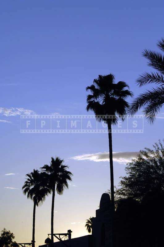 Palm Trees at Arizona Sunset