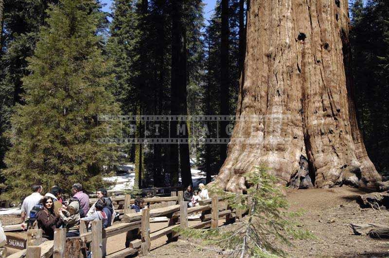 People Relaxing and taking pictures near the General Sherman, enormous tree trunk