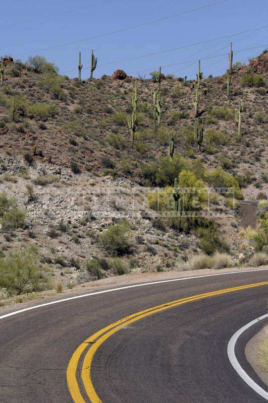 Desert landscape around scenic route, Saguaro Cacti