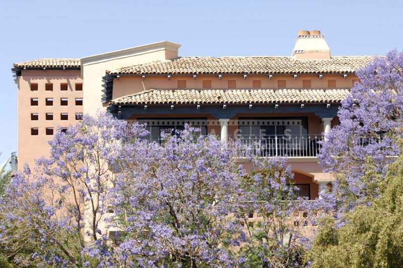 Scottsdale Links hotel and Trees in purple blossom