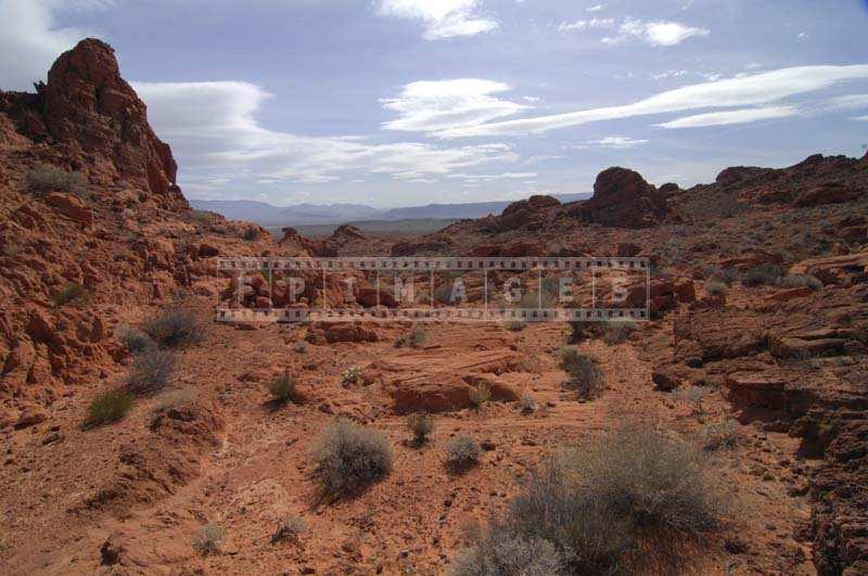 Desert Landscape of the Park