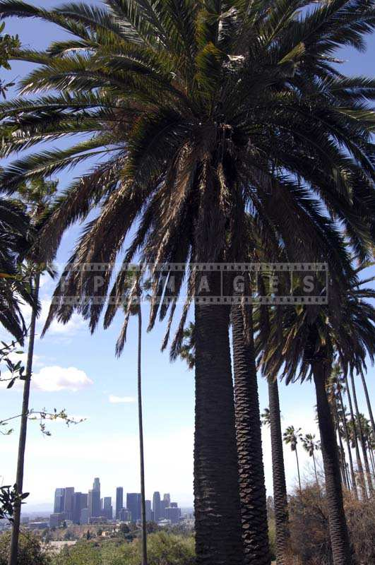 Photo of the Palm Trees against the Scenic LA Cityscape