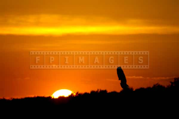 Disappearing sun and saguaro Arizona sunset landscape