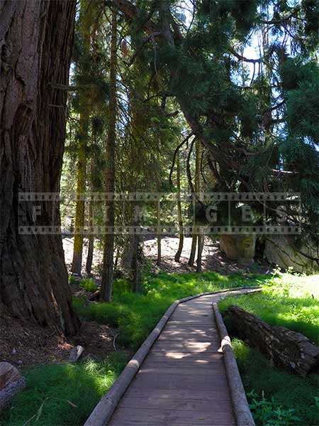 Walking path in Sequoia National Park