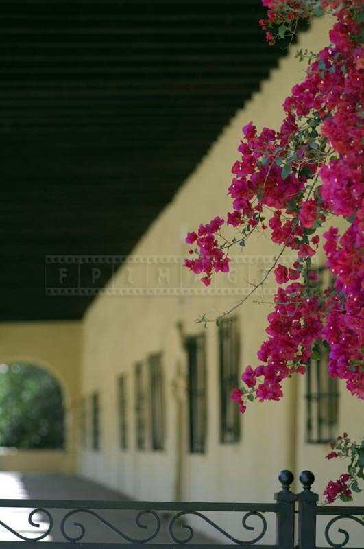 Pretty View of the Bougainvillea, pictures of flowers