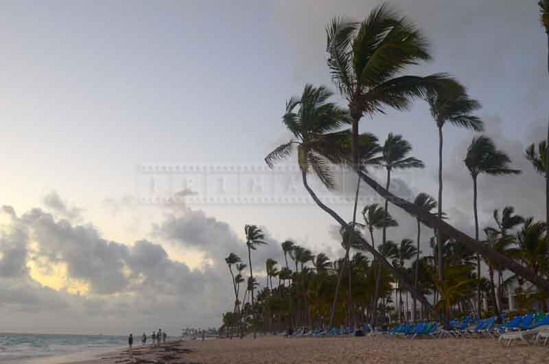 Early morning and wind swept palm trees