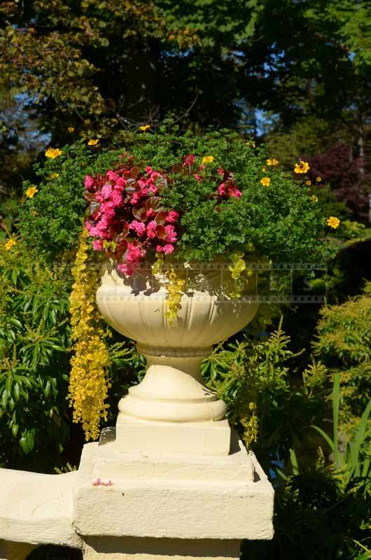 Stone urn with beautiful blossoms