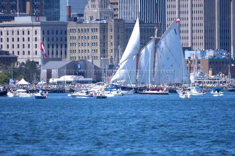 Bluenose sailing by the Maritime Museum waterfront full of spectators, Parade of Sail