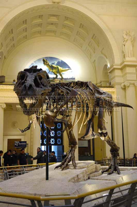 Well preserved dinosaur bones of T-Rex Sue at Field Museum