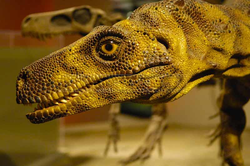 Close up image of dinosaur replica at field museum
