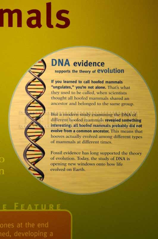 DNA evidence explanation information board