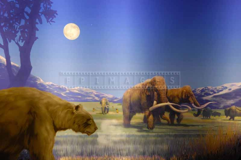 Mammoths and other animals in diorama of ancient world, pictures of animals