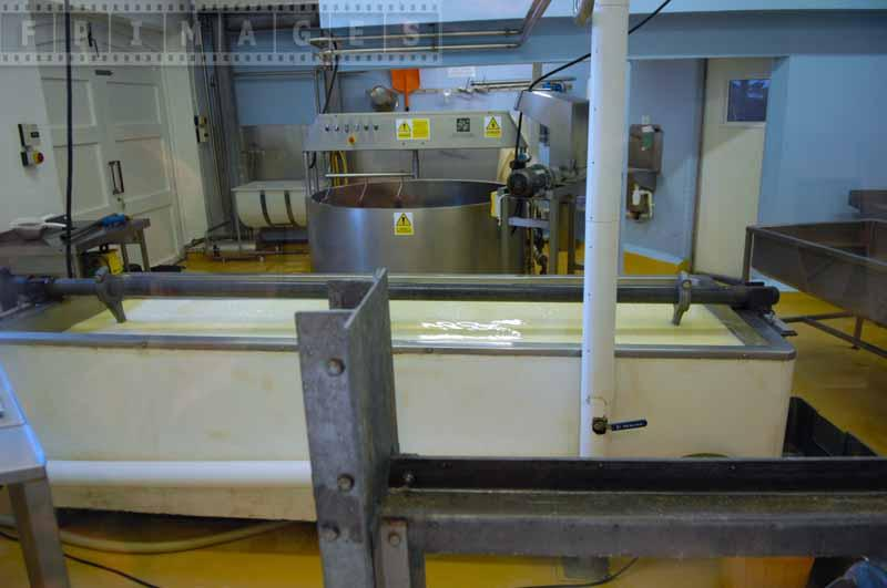 Cheddar cheese production