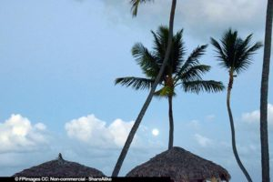 Palapa roofs, palm trees and full moon