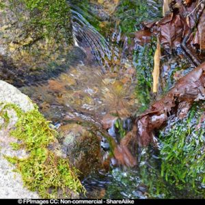 Small forest brook - nature pictures