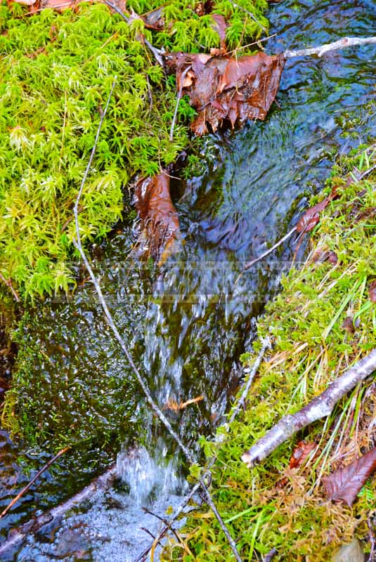 Sphagnum moss and forest brook, water images