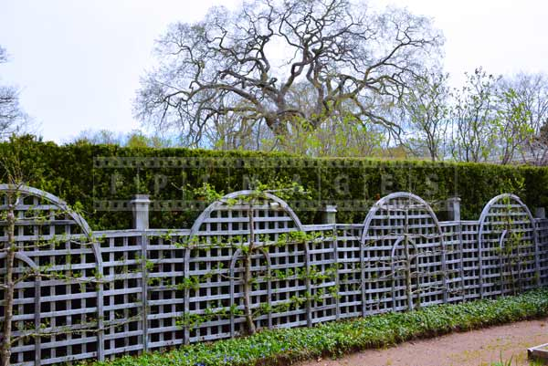 Spring Images, hedge with evergreens and trellis