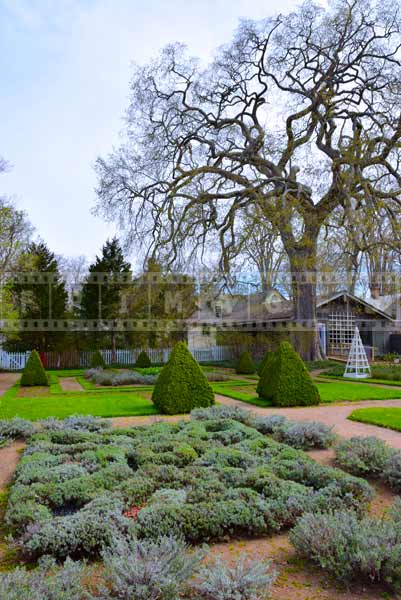 Knot Garden represents english garden layout, spring images