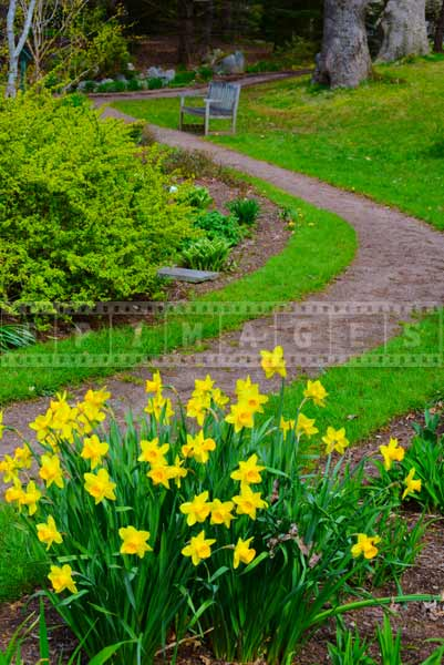 Landscape pictures of botanical gardens with yellow daffodils
