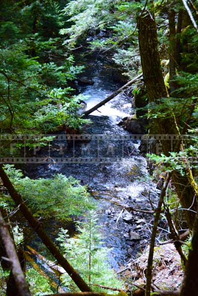 Forest brook flowing in the forest, water images
