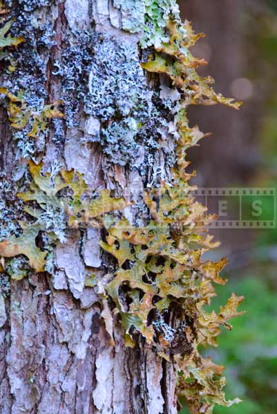 Lichen on a tree trunk, nature pctures