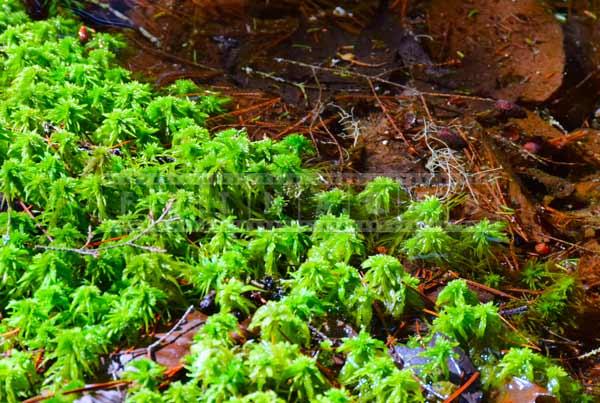 nova scotia forest sphagnum moss nature pictures