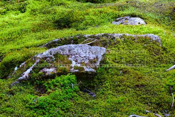 nova scotia hiking trail with rocks and moss