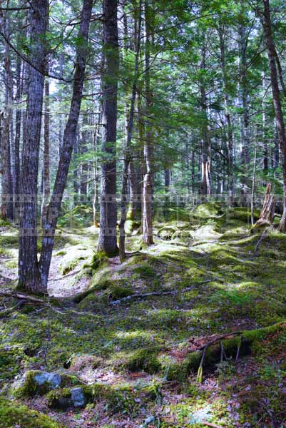Outdoor adventures in Nova Scotia, hiking trail picture