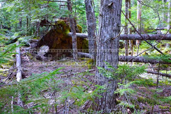 Fallen trees near hiking trail in forest, outdoor pictures