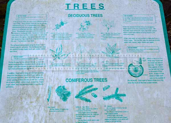 Trees information, Nova Scotia forest hiking trail picture