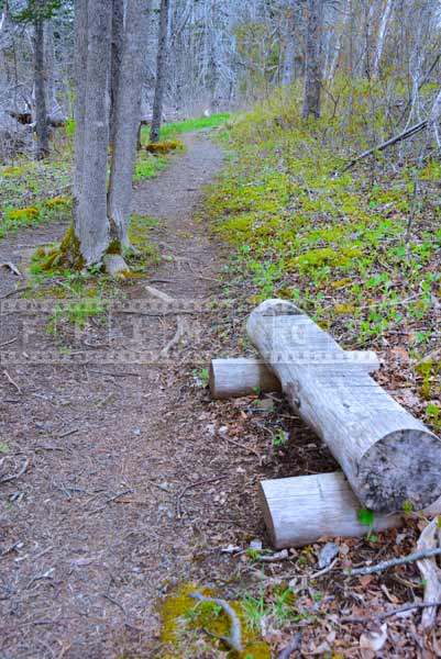 Log Bench at hiking trail, travel images