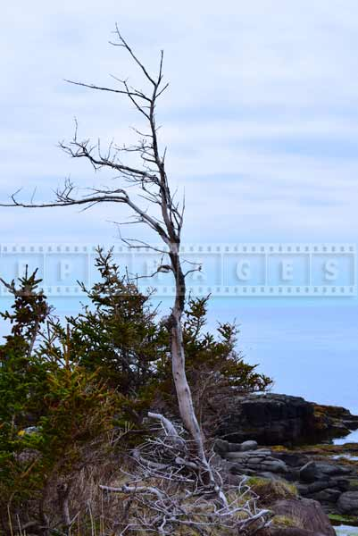 Scenic travel images of Bay of Fundy shore and windswept dead tree
