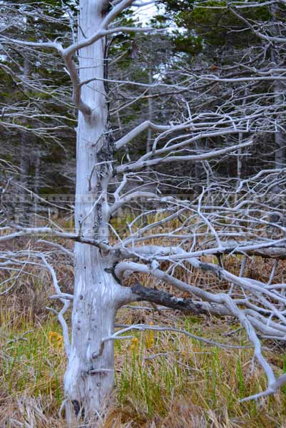 Dead tree in the forest, nature photos and hiking trail picture