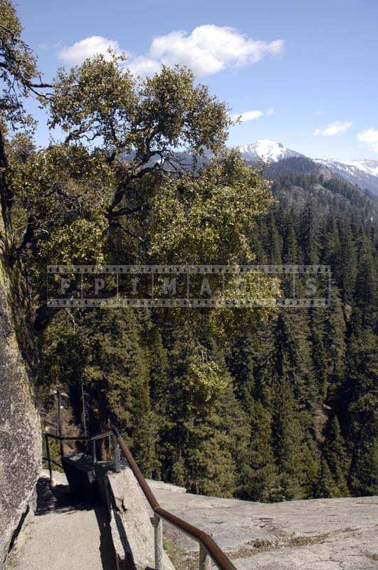 Steep hiking trail to Moro rock with some oak trees, travel images